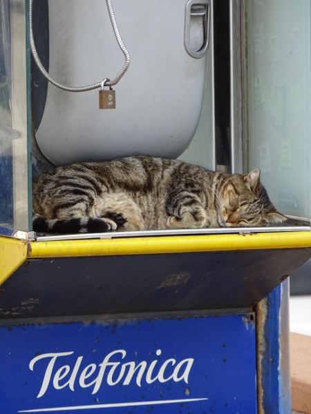 Ibiza urlaub 2016 Katze Telefonzelle