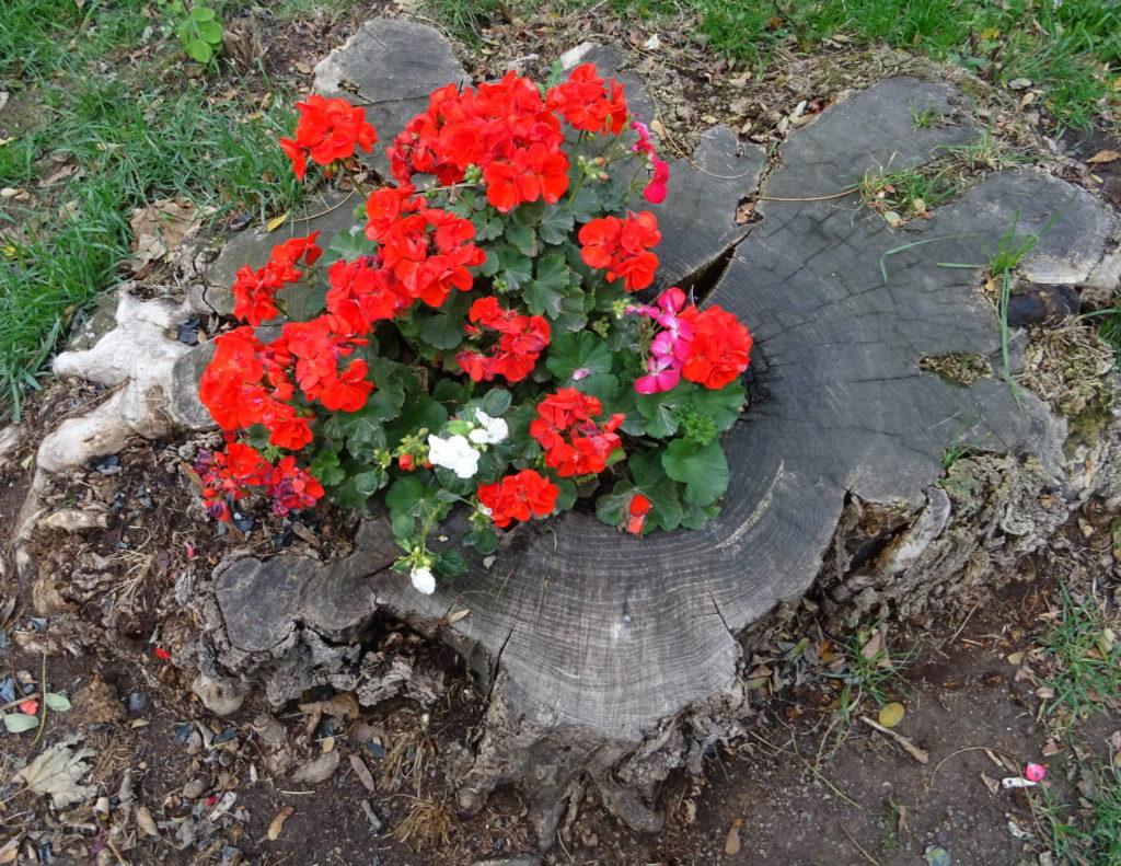 Blumen wachsen auf einem Baumstumpf