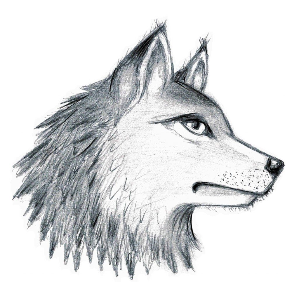 """Wolf, eine Illustartion zum 1. Kapitel von """"Die Wächter von Nimrhon: Ruf nach Freiheit"""" ~ M. Rose-Everly (c)"""