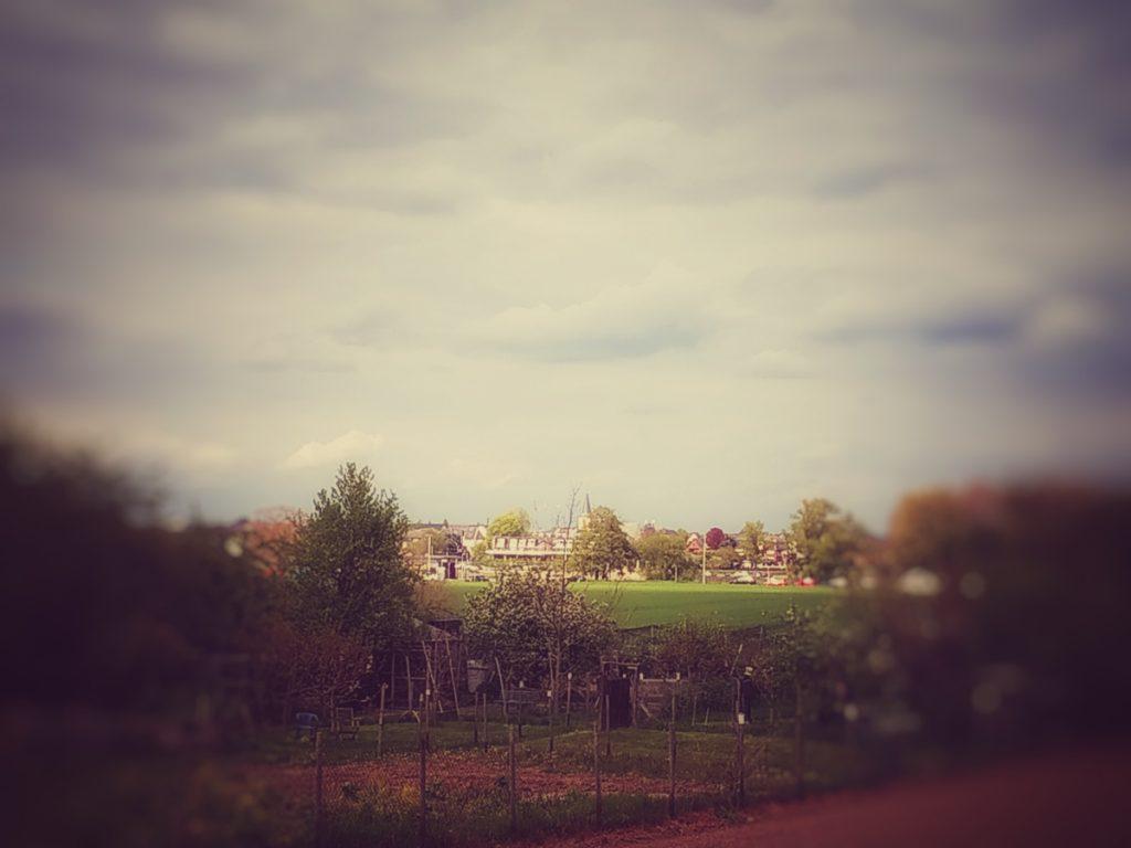 Blick über die Felder Richtung Rhein, der selbst nicht zu sehen ist