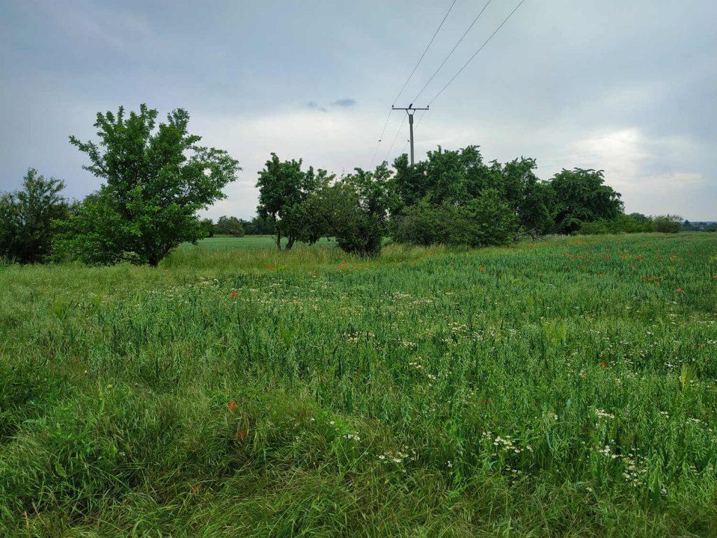 Feld mit Bäumen im Hintergrund