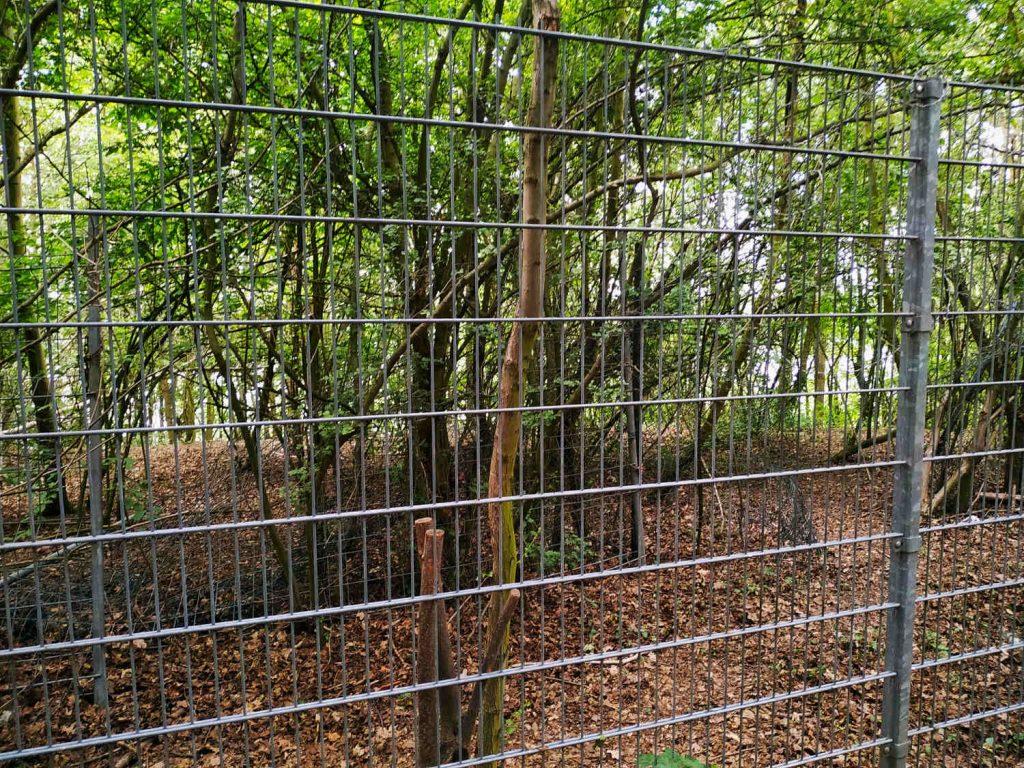 Mondorfer See lässt sich hinter dem Zaun erahnen