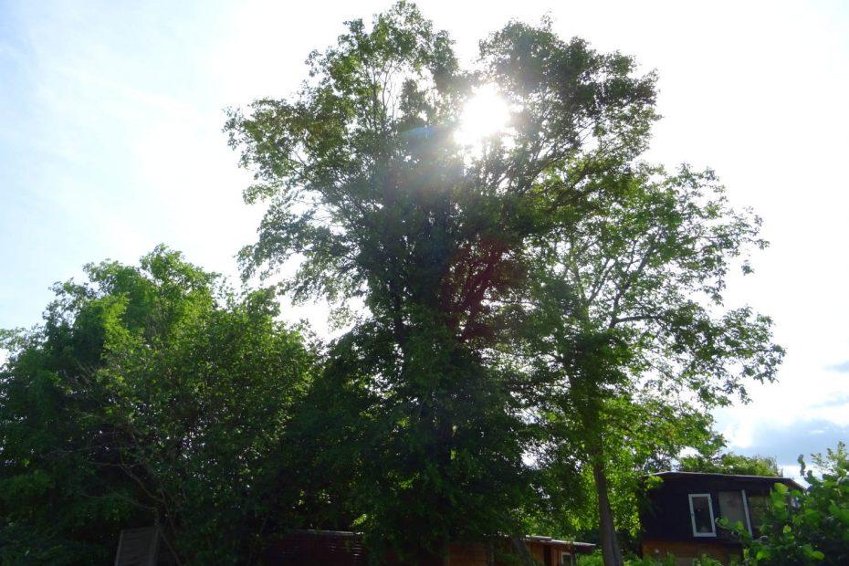Gegenlichtaufnahme, Sonne hinter dem Baum