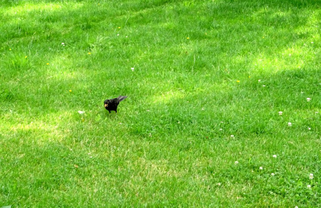 Vogel auf der Wiese