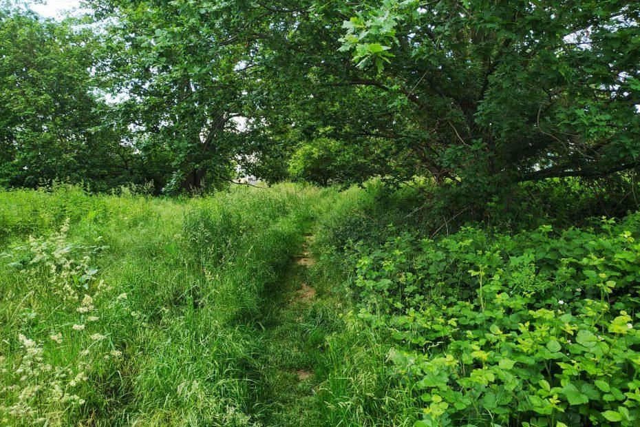 Schmaler Pfad durch die Felder, gesäumt von Bäumen