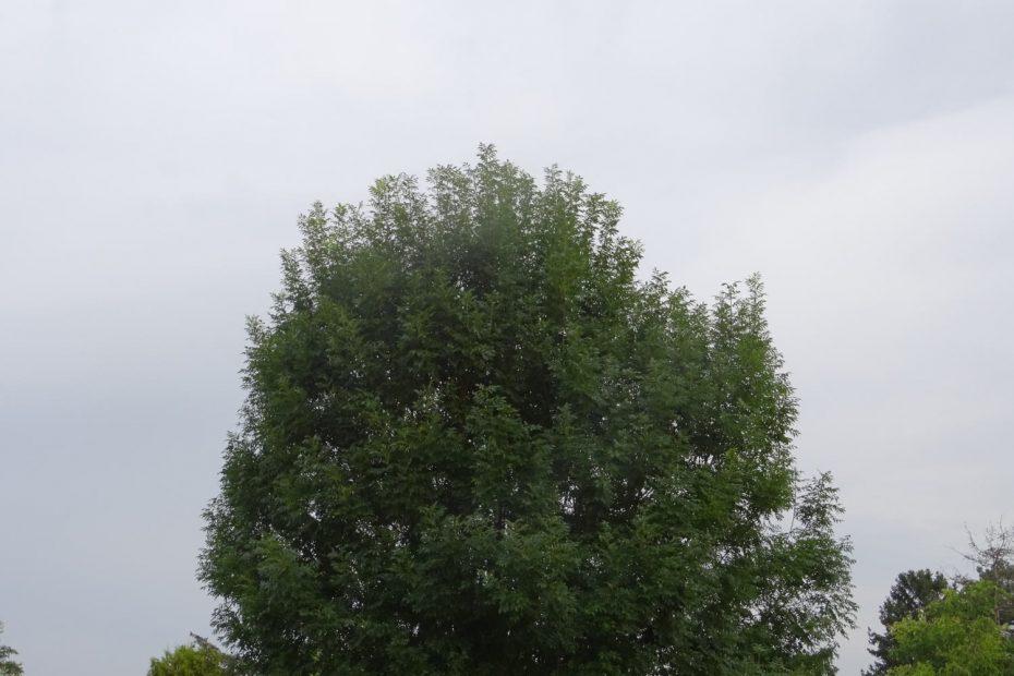 grauer Himmel hinter einem Baum